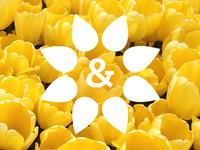 Daisies & Drops: Essential Oil Identity