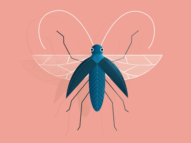 beetle friend. styleframe wings bug beetle nature photoshop vector illustration 2d