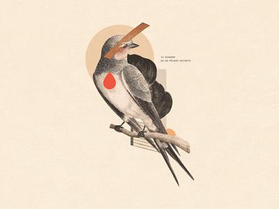 Tu nombre es un pájaro secreto illustration collage