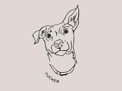 Tucker procreate pet portrait pet retro vintage dog art dog illustration dog portrait dog minimal digital illustration illustration digital art graphic design design