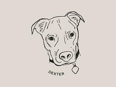 Dexter pet retro vintage pet portrait dog illustration dog portrait dog dog art digital illustration minimal procreate illustration digital art graphic design design