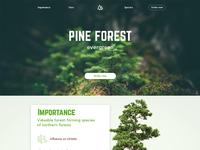 Pine Forest scketch