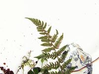 Botanical Poster Contest III