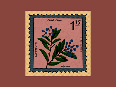 Vietnamese Elderberry Stamp procreate illustration berries fruit vietnamese stamp