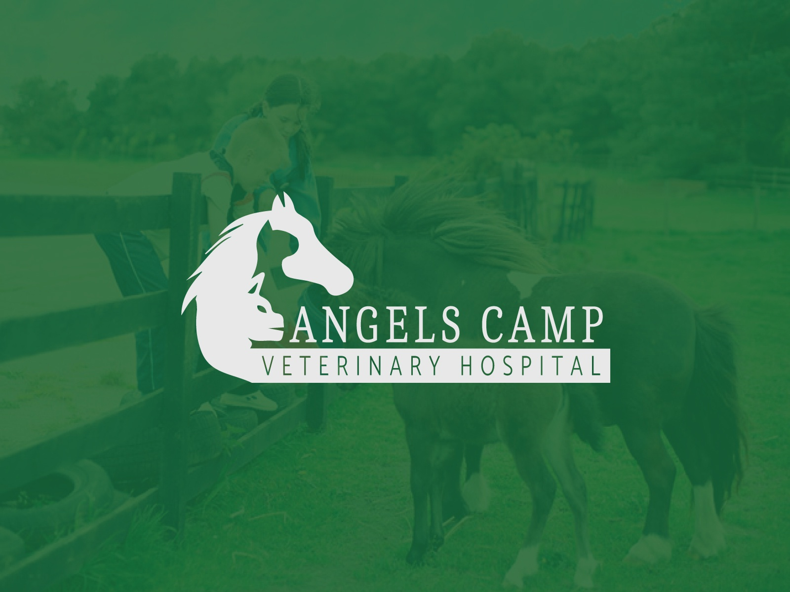 Angels Camp Veterinary Hospital by Saber Ahmed on Dribbble