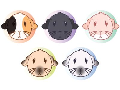 Satin Guinea Pig Icons