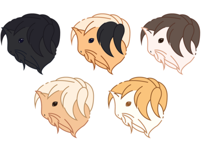 Long-Haired Guinea Pig Icons