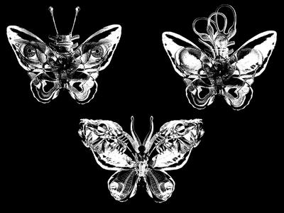 Metamorphosis - new species beasts disturbing gross species creatures bugs moth insects dark metamorphosis