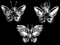 Metamorphosis - new species
