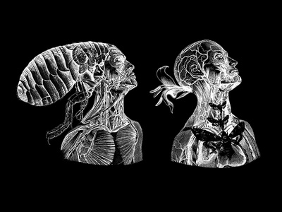 Metamorphosis Jan 2018 beasts disturbing gross species creatures bugs human insects dark metamorphosis