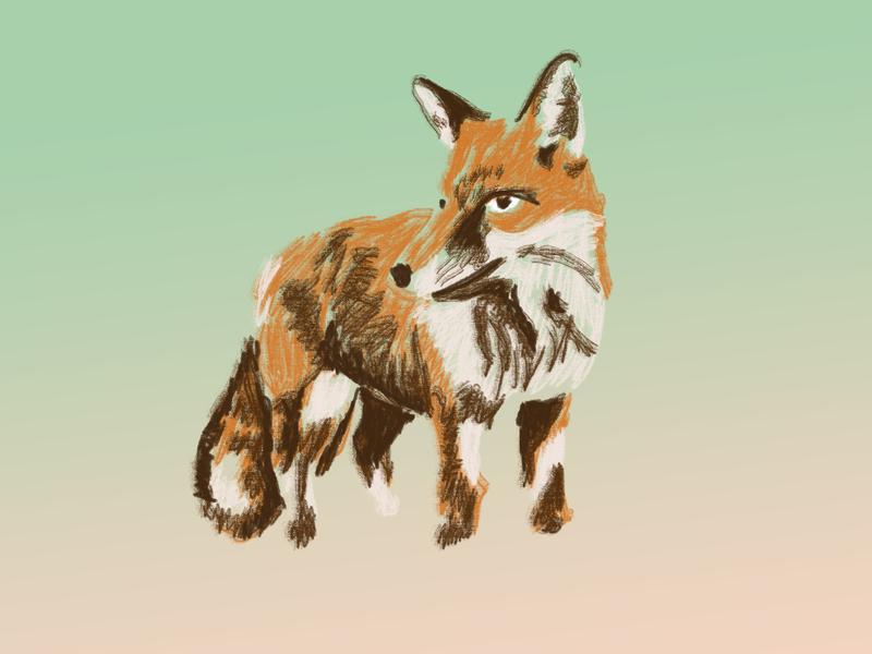 Fox Sketch fox quick sketch illustration