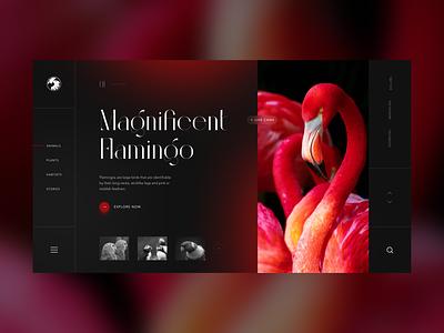 San Diego Zoo Wildlife concept daily logo oink flamingo wildlife zoo animals web webdesign landing page ui website
