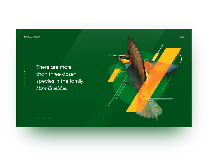 Ornithic Encyclopaedia Page landing creativity design homepage daily webdesign ui web landing page website