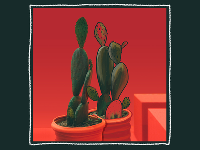 Ilustrated Photo Series - Clambering Cacti
