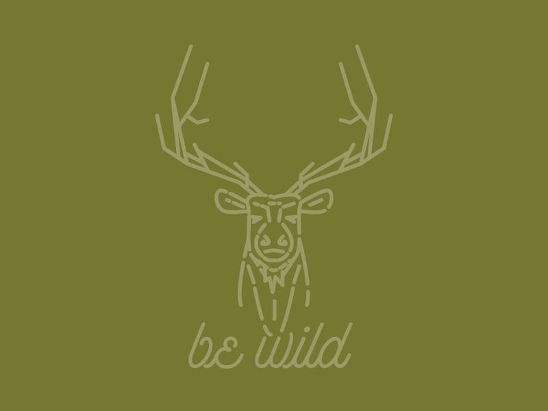 Elk wild animals adventure outdoors elk