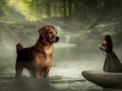 Photo Manipulation // Dog