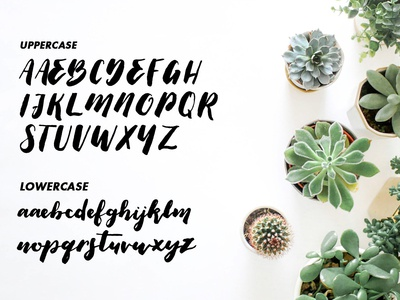 Thick Brush Script