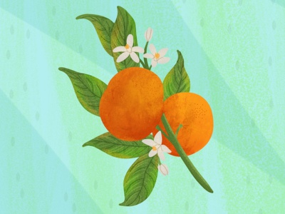 Orange childrens illustration childrens book photoshop art procreate drawing digital art illustration