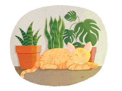 My furry friend Akira illustration aloe monstera sansevieria succulent pet akira gato cat