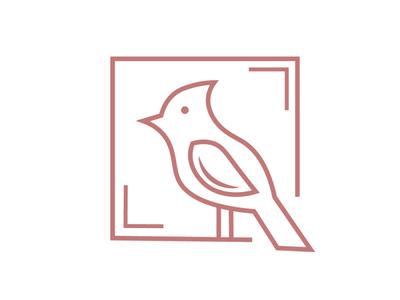 Bird illustration design