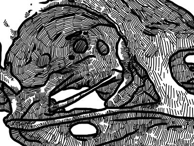 Corvus Corax skull