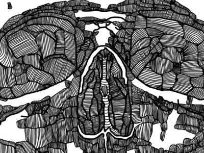 I finished the unfinished skull sketchbook pro ipad sketch cross hatching skull illustration skull digital illustration illustration human skull