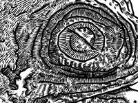 Common starling skull