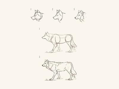 Wolf Study wolfdrawing wolf lineart adobe photoshop digital art 2d art