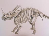 Monoclonius crassus fossils