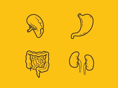 Human Anatomy. Part 2