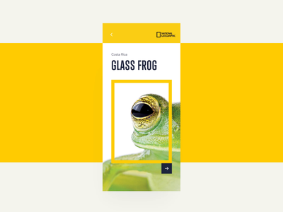 Frog Article - National Geographic natural animal geographic 3d magazine app article frog