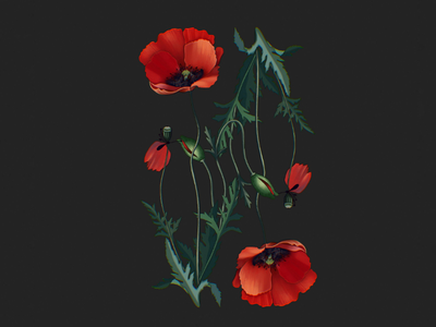 Poppies procreate illustrator procreate giftcard card design poster flower power illustrator illustrations raster illustration botanical pattern botanical illustration pattern flower pattern flower art flower