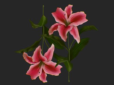 Lilies illustrator illustration procreate leaves pink vine plants botanical pattern flowers flower lilly