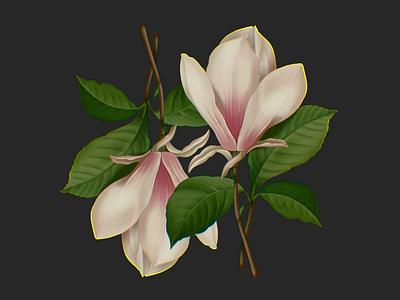 Magnolia background postcard design raster illustrator leaves vine flower art pattern design pattern flower pattern editorial botanical botanical art plants flower painting illustration procreate flowers magnolia