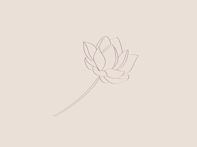 Lotus Illustration