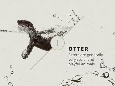 Otter Fun Fact