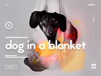 Dog in a blanket ui ux design landing page webdesign dribbble full2