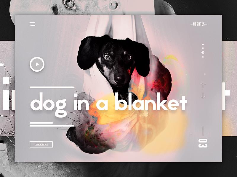 Dog in a blanket ui ux design landing page webdesign dribbble shot