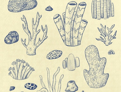 Coral Sketch Pattern