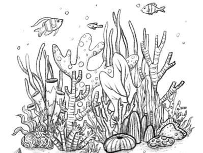 Coral Sketch