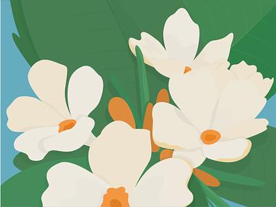 Plumeria plumeria ilustrator illlustration flower illustration flowers flower