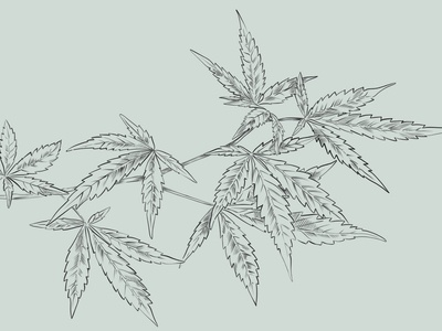 Hemp Leaves Illustration