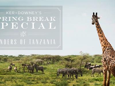A Tanzanian Safari safari africa travel tommaso frame animal giraffe zebra