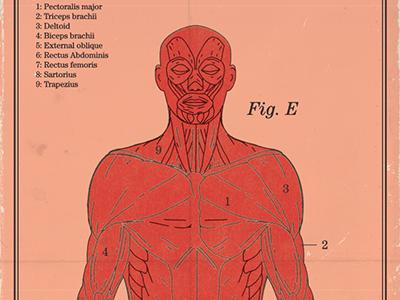 Anatomical vintage color logo illustration icon retro shape 60s mid century science anatomy human body