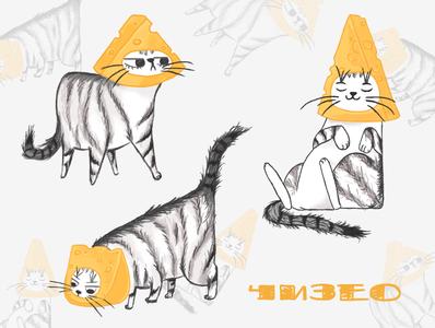 🧀 Сheese cat 🧀
