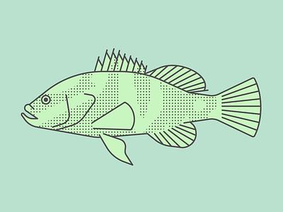Grouper underwater tail fins sea ocean salt water grouper fish