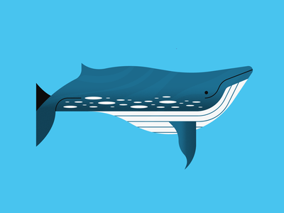 Blue Whale design animal illustration whale animal illustrator illustration
