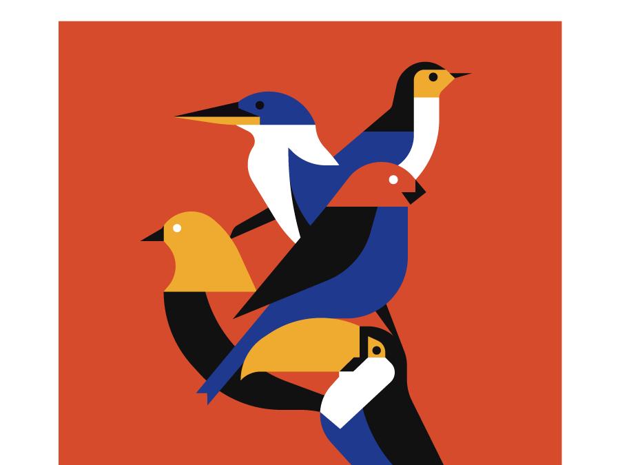 The Birds poster print bird illustration animal birds bird
