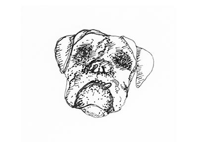Dog Sketch animal rescue boxer sketch hand drawn dog
