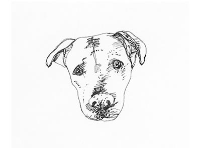 Dog Sketch mutt hand drawn animal rescue sketch illustration dog